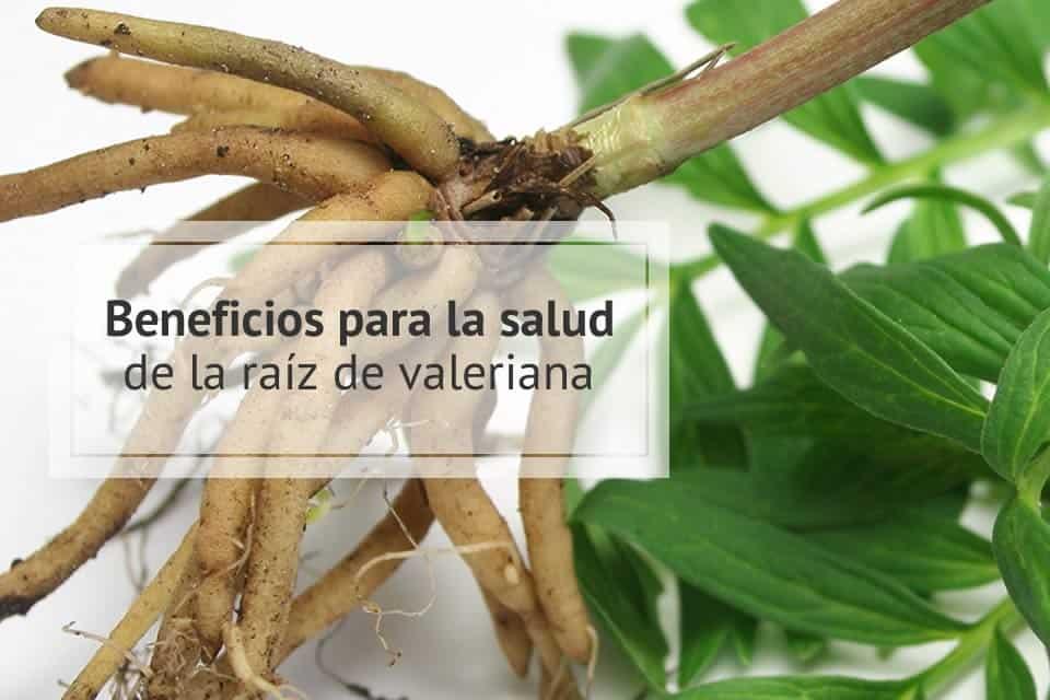 raíz de valeriana